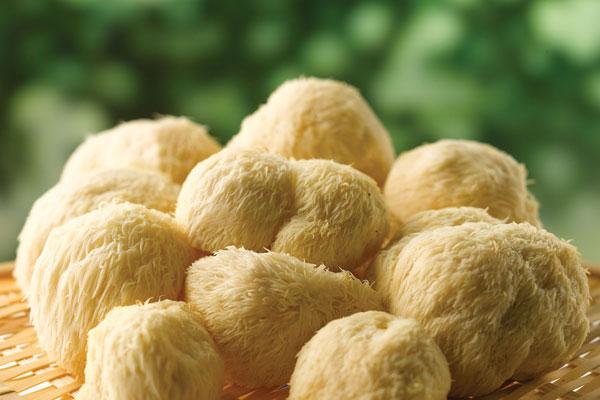 猴头菇为什么能够养胃?