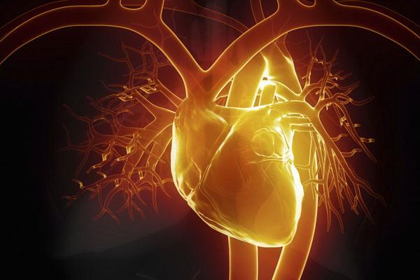 DHA养护心脑血管