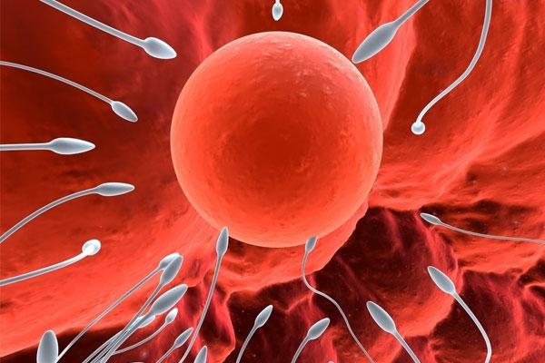 如何提高精子活力