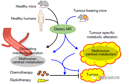 营养在线 | Nature实锤!饮食限制助力癌症治疗