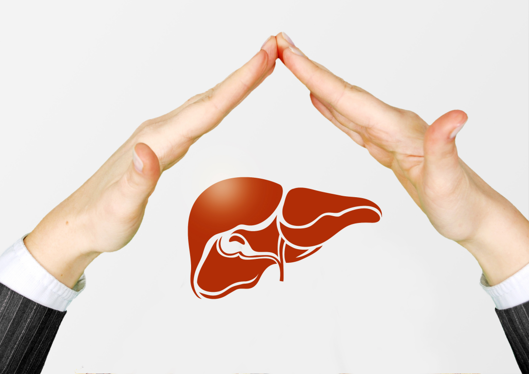 Bacillus coagulans TCI 711解酒益生菌如何帮助肝脏降低负担