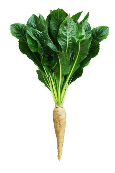 """维乐夫:在菊苣根中提取的""""菊苣蜜纤维""""对肠道功能有益"""